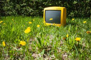 Keltainen matka tv voikukkakedolla